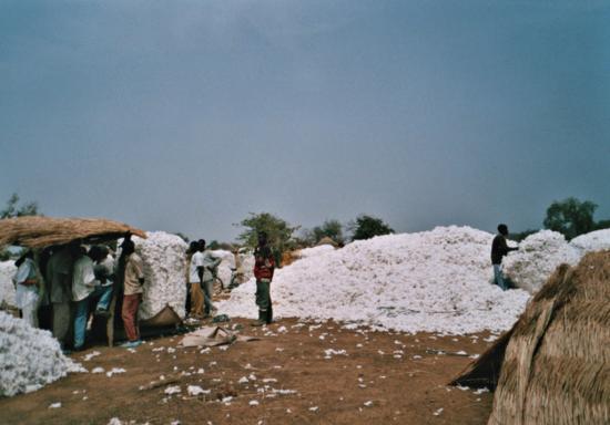 Près de La Kompienga - récolte du cotton