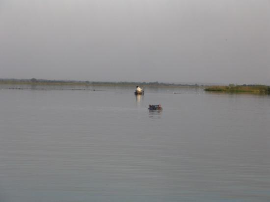Hippo à 20 mètres frissons garantis