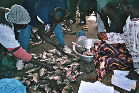 La Kompienga - Vente de carpes et de capitaines du lac 2