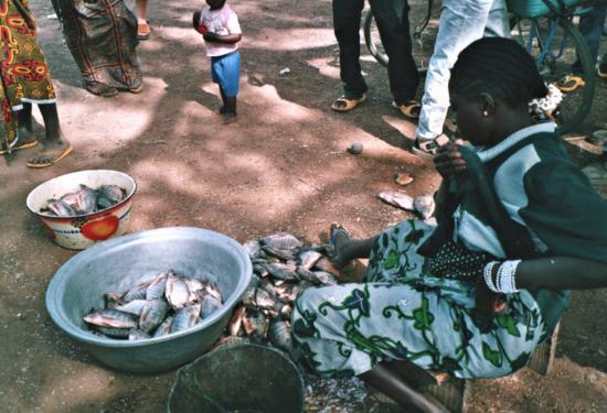 La Kompienga - Vente de carpes et de capitaines du lac 1
